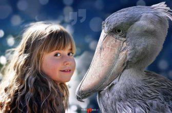 Самые большие птицы на TheBiggest.ru