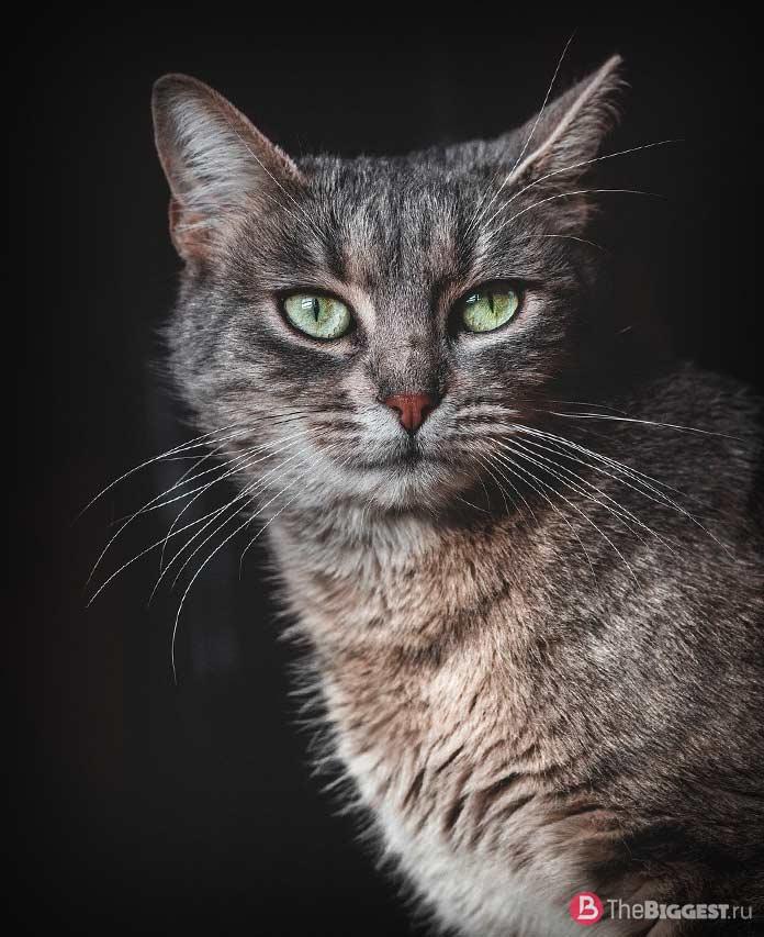 10 вещей, сделанных из кошек. CC0