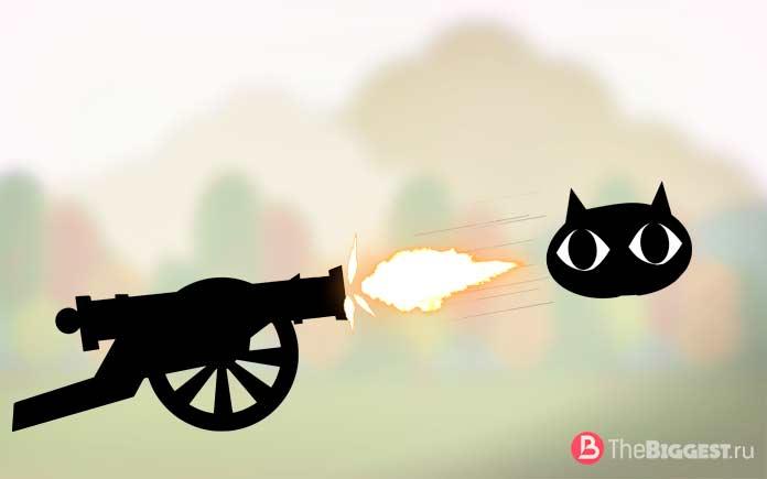 10 необычных вещей, сделанных из кошек: Наступательное оружие. CC0