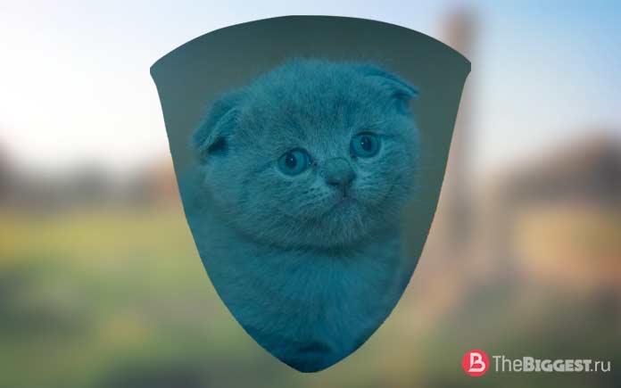 10 странных вещей, сделанных из кошек: Щит из кошки. CC0