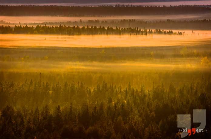 Самые большие леса мира. CC0