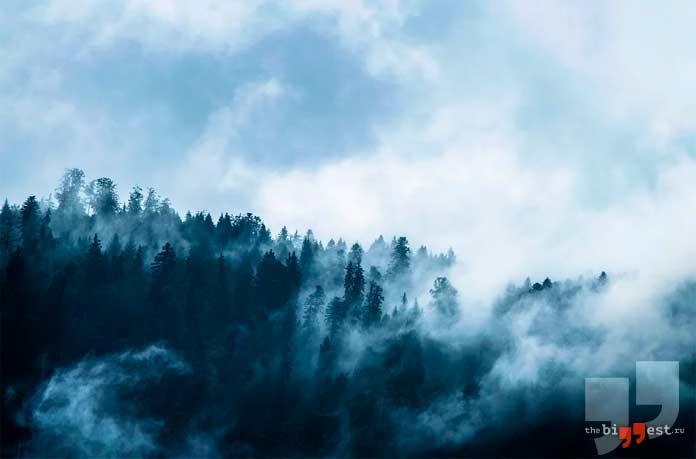 Самые большие леса планеты. CC0