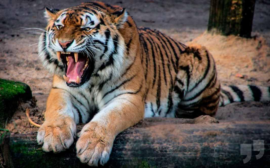 15 самых агрессивных животных