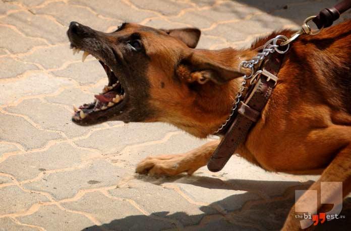 Агрессивные животные. CC0