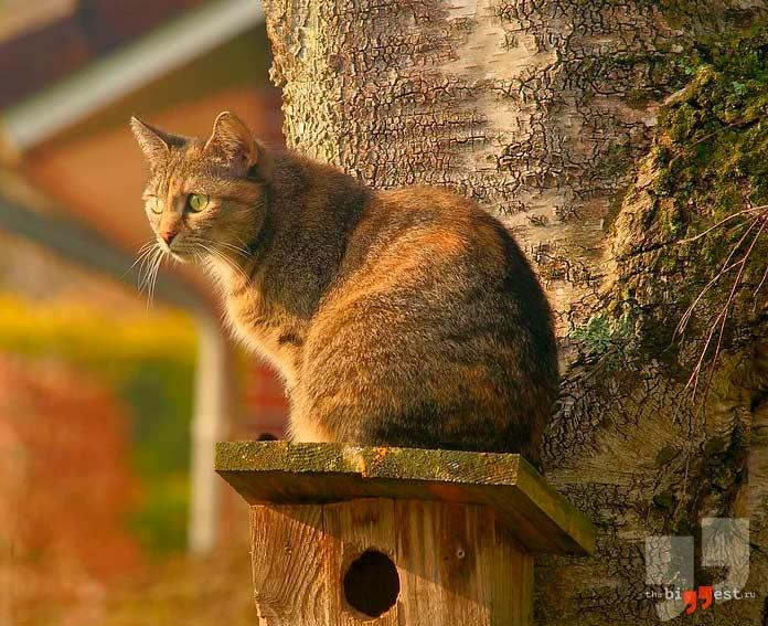 Кошка с самым острым слухом. CC0