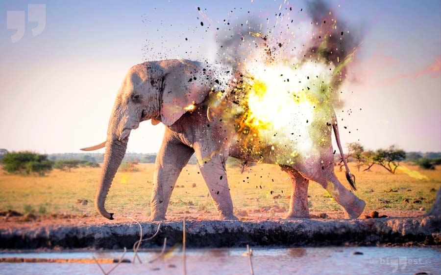 Взрыв слона. CC0