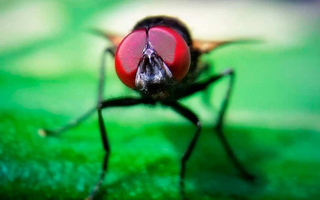 Надоедливые насекомые