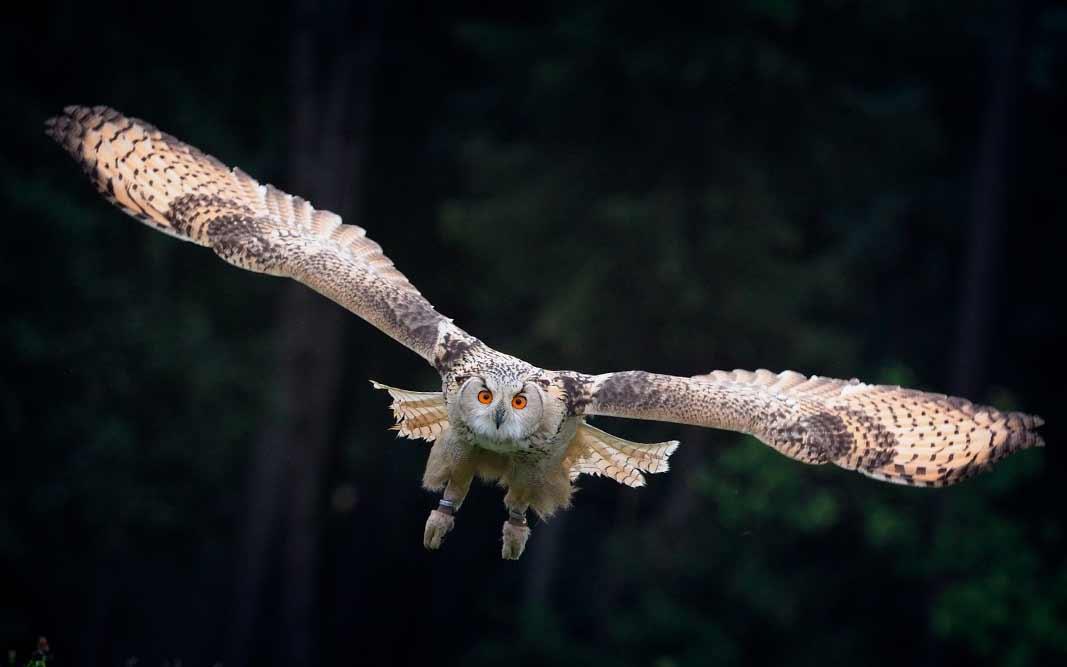 самые опасные птицы в мире. CC0