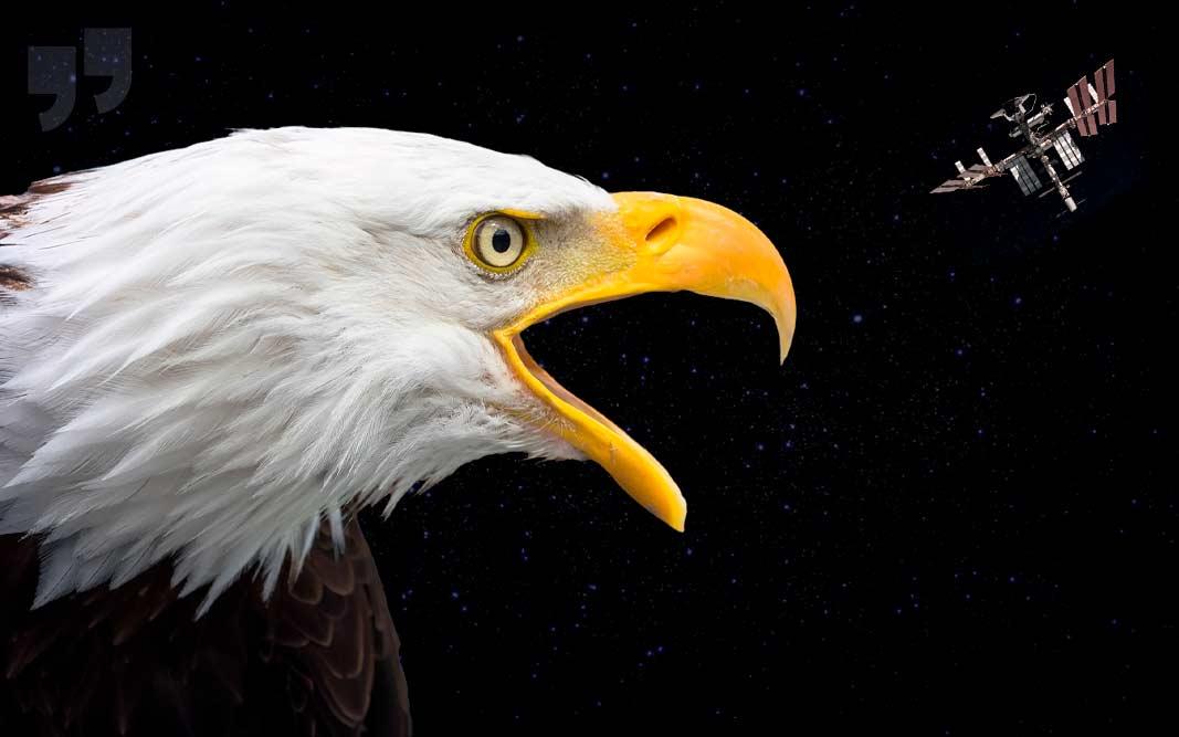 Высоко летающие птицы. CC0