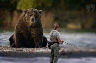 Медведи CC0