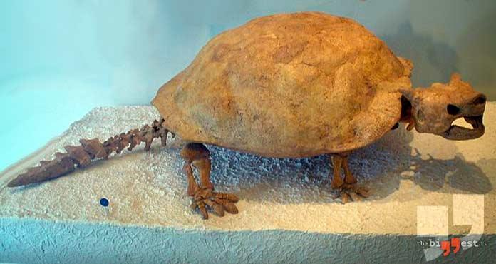 Некоторые останки животных свидетельствуют о массовых вымираниях. CC0