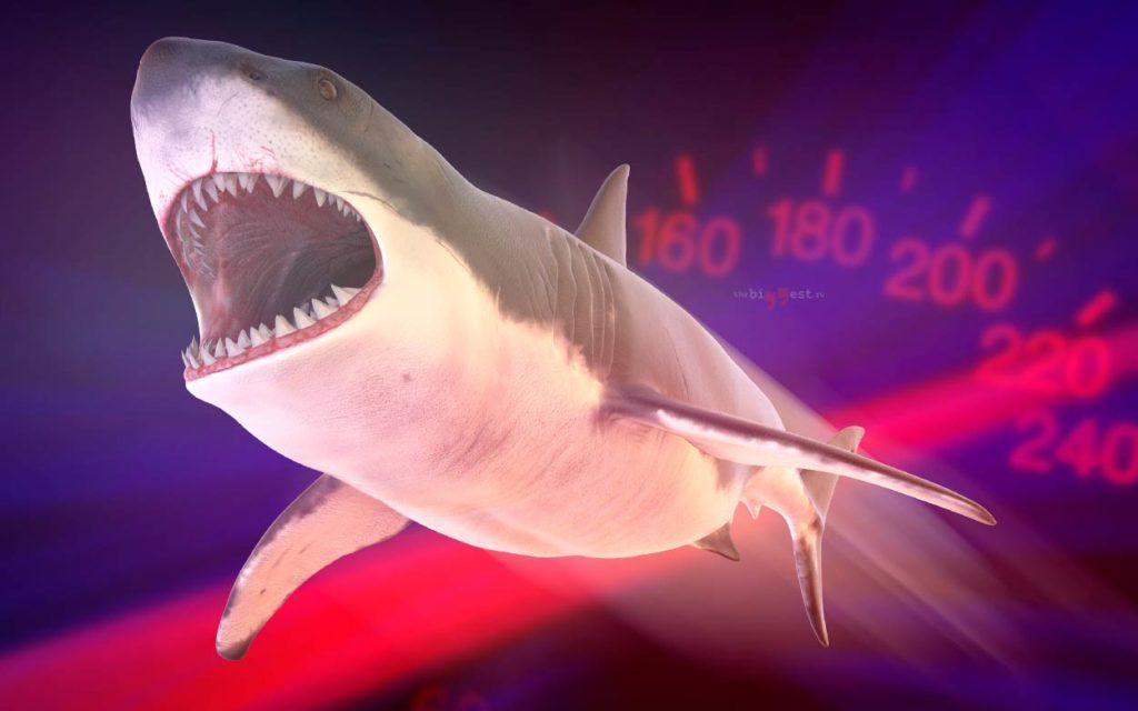 Самые быстро плавающие морские животные в мире. CC0