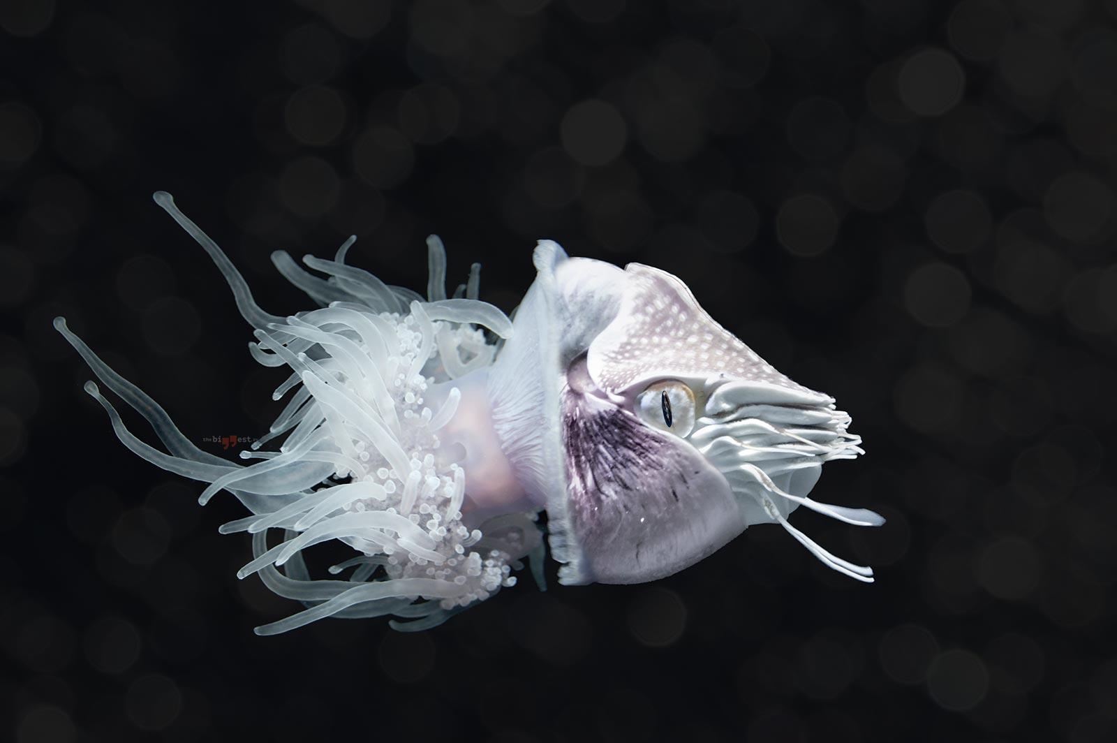 Глубоководные животные. CC0