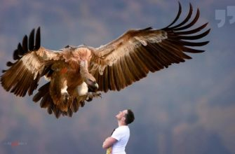Самые крупные хищники в мире. CC0