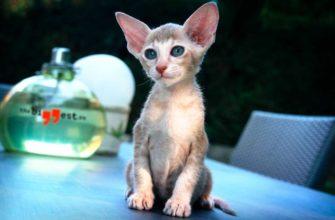 Самые маленькие кошки. CC0