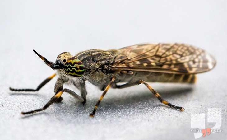 Horsefly. CC0