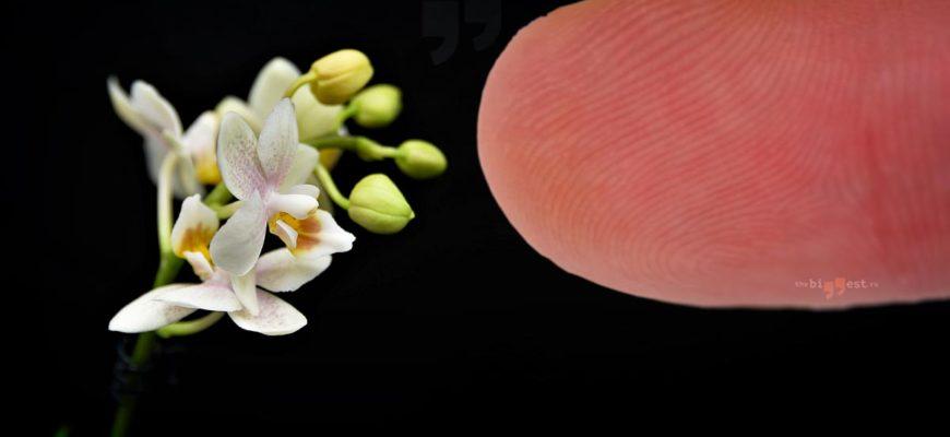Самые маленькие цветы. CC0
