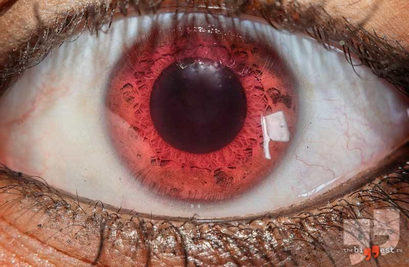 Красные глаза. CC0