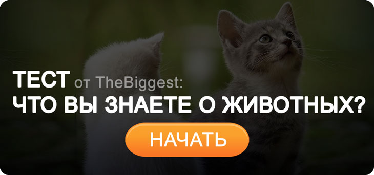 Тест про животных cc0
