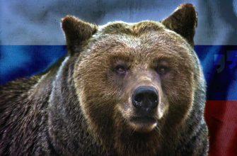 Медведь из России. CC0