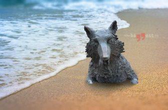 Пляж cc0