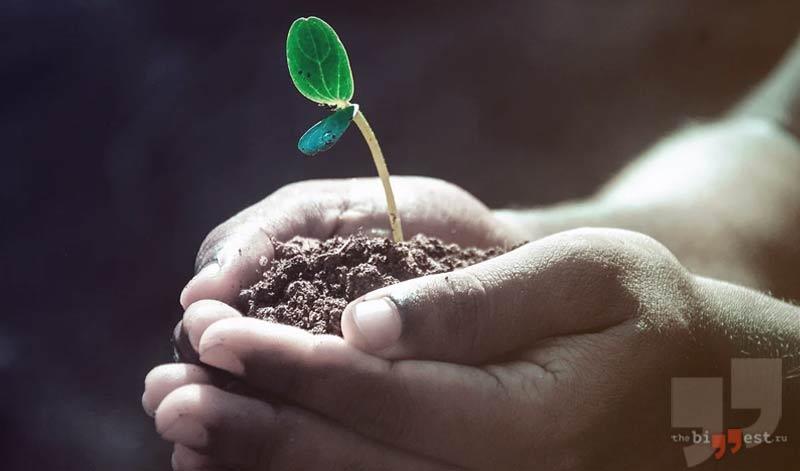 Тест про растения cc0