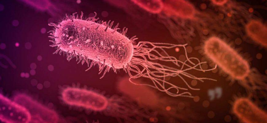 Самые большие Бактерии сс0